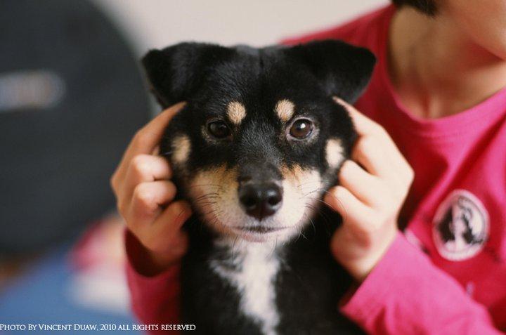 可愛小狗照片