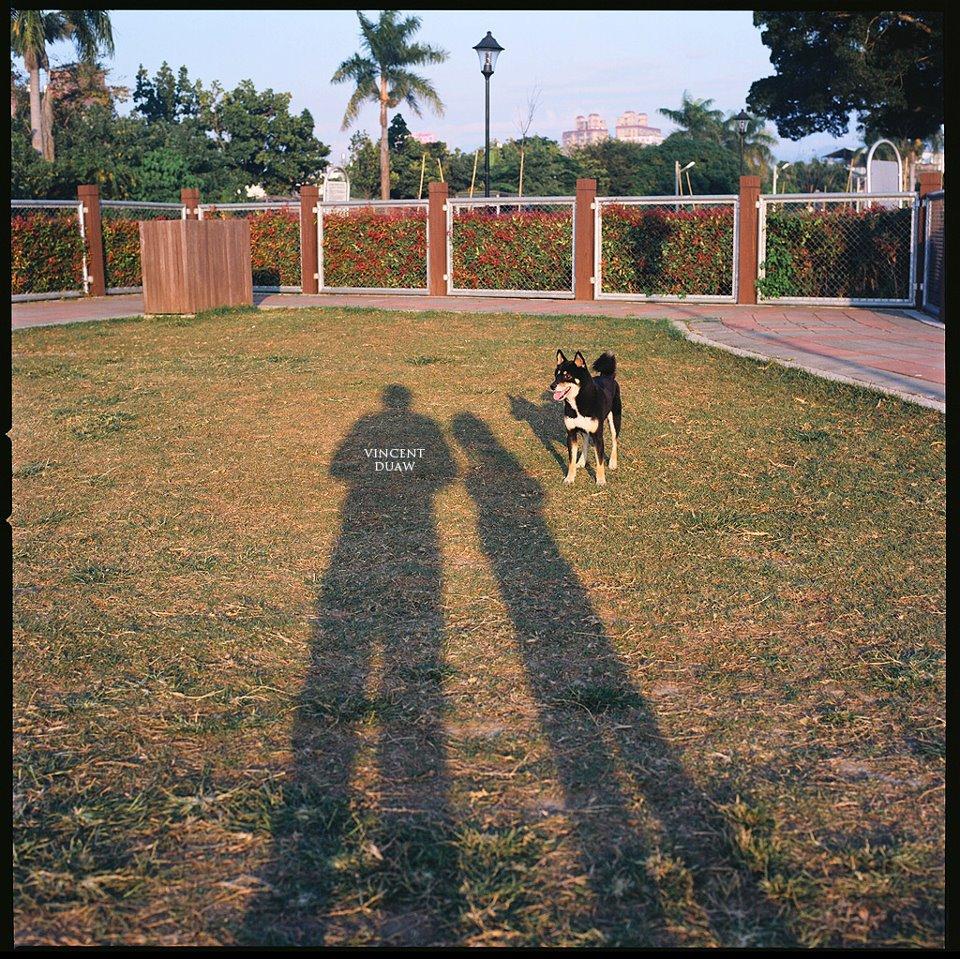 草地寵物攝影