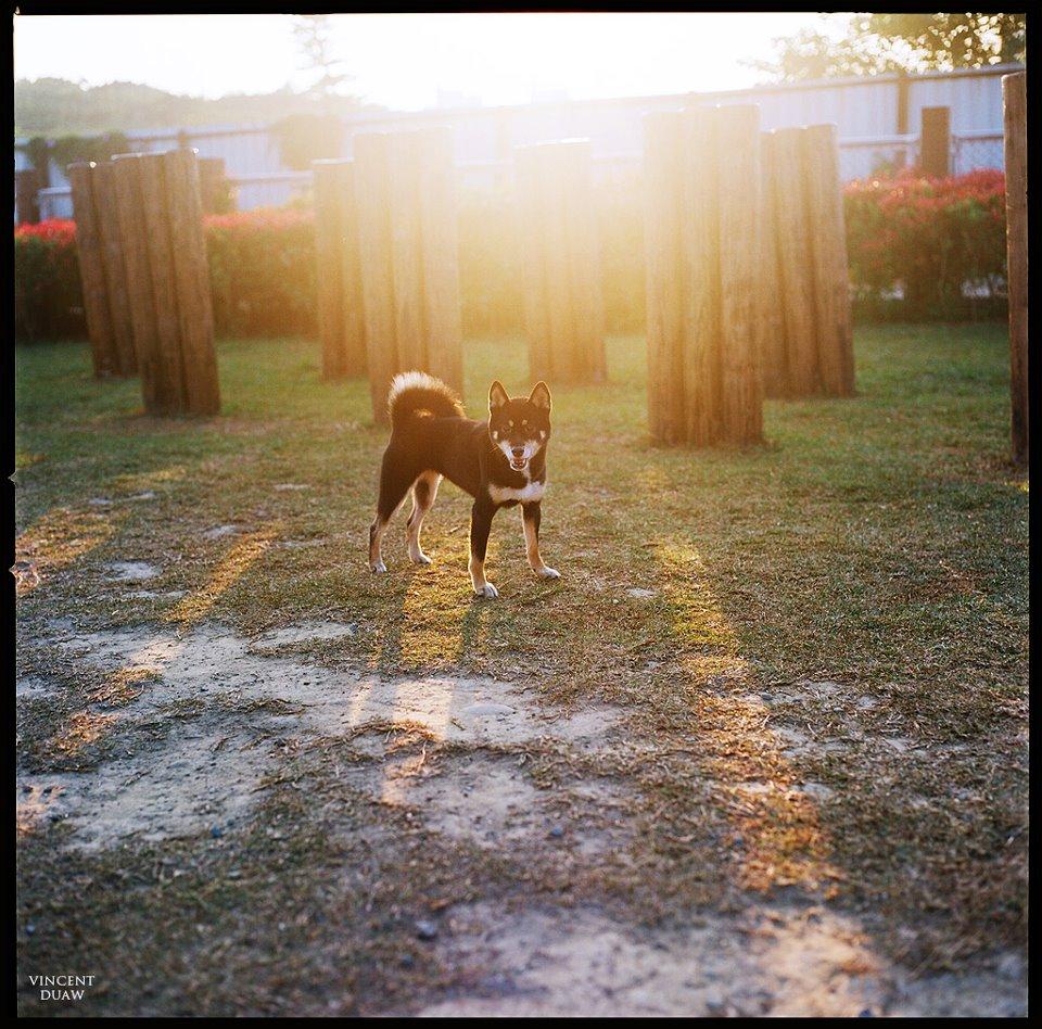 寵物戶外攝影
