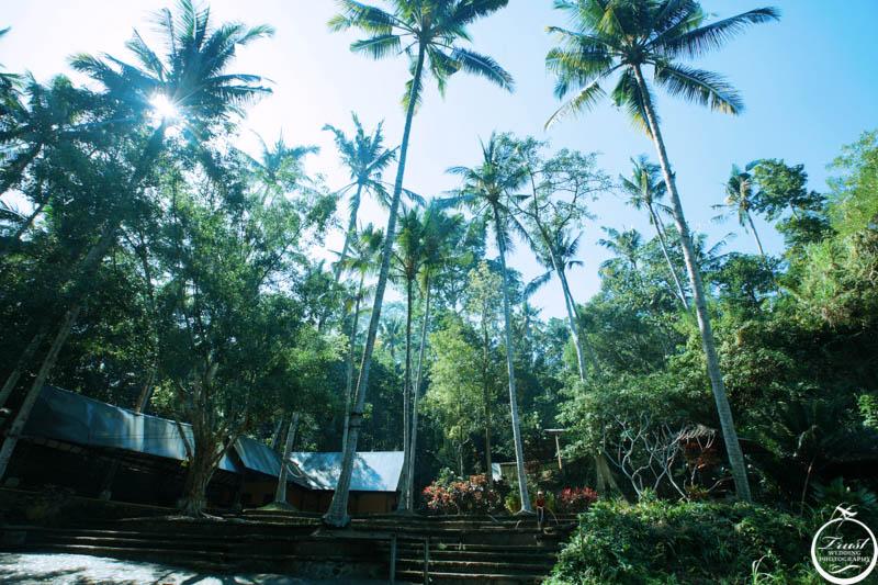峇里島叢林