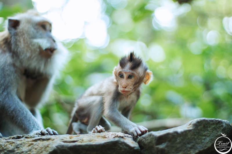 峇里島猴子公園