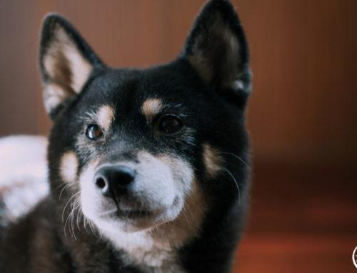 毛孩寫真|寵物攝影價格|寵物寫真推薦|狗狗寵物照|汪星人寫真