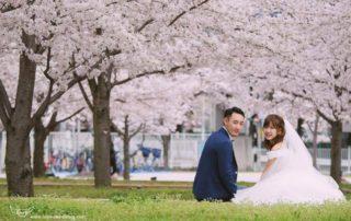 海外婚紗櫻花季