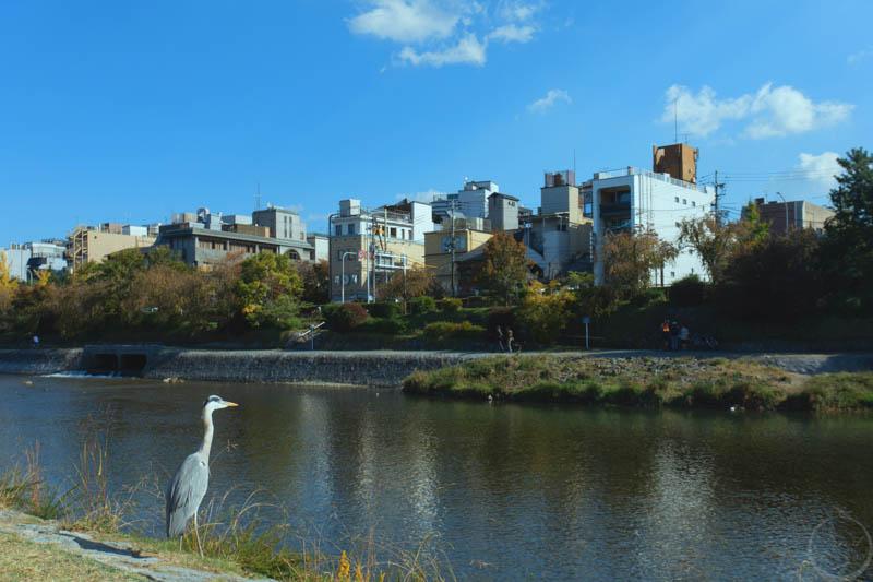 京都鴨川風景9